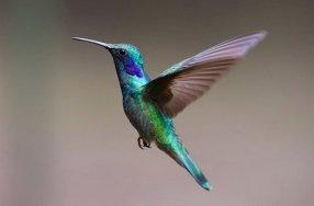 hummingbird-2139279__340-001