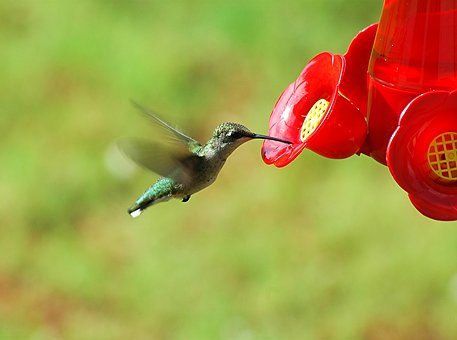 hummingbird-1617433__340-001