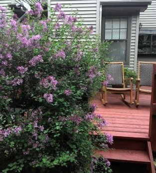 liliac and rocking chairs-smaller