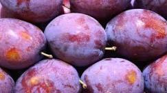 Italian prune plums