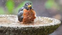 bird bath outside