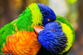 birds hugging