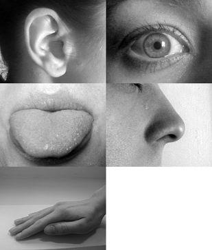 Five_senses