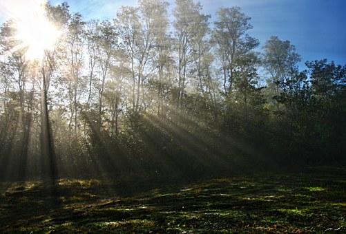 sunny day rays