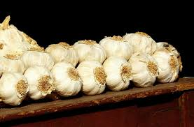 garlic heads