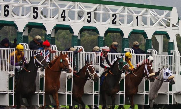 horse starting gate