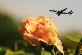 flowers airplane better